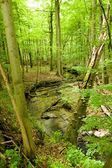 Green forest with a river — Stok fotoğraf