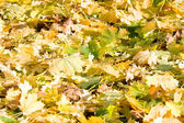 Colorful leaves in late autumn — Stock Photo