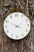 Clock hung on a tree - a transient time — Stock Photo