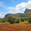Majorcan Field — Stock Photo