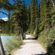 Stock Photo: Trail Lake Louise