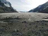 Athabasca glacier — Stock fotografie