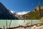Dead tree at Lake Louise — Stock Photo