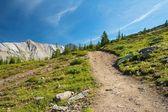 On Parker Ridge Trail 2 — Stock Photo