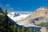 Peyto Lake Glacier — Stock Photo