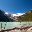 Dead Tree at Lake Louise - Stock Photo