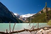 Toter baum am lake louise — Stockfoto