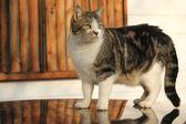 Ciekawy kot — Zdjęcie stockowe