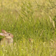 Bunny in the grass 1 - Stockfoto
