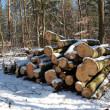 Lumber in the snow — Stock Photo