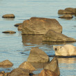 Polar Bear in the water 1 — Stock Photo