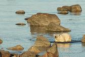 белый медведь в воде 1 — Стоковое фото