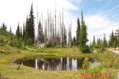 Mount Revelstoke Pond — Stock Photo
