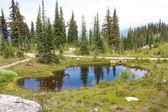 Mount revelstoke rybník — Stock fotografie