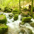Black Forest Brook 2 — Stock Photo #33293197