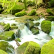 Black Forest Brook 1 — Stock Photo