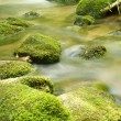 Black Forest Brook closeup — Stockfoto