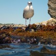 Stock Photo: Suspicious Seagull on a rock