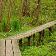 Wooden walkway in the bog — Stock Photo