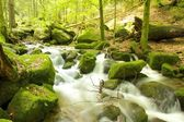 Black Forest Brook 2 — Stock Photo