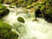 Czarny las potok 3 wb — Zdjęcie stockowe