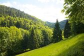 Black Forest hill and meadow — Stock Photo
