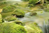 Black Forest Brook closeup — Stock Photo