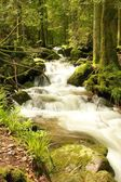 Black Forest Brook — Stock Photo