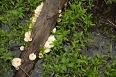 Branch and fungus — Stock fotografie