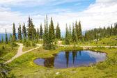 Mount Revelstoke Pond — Stock Photo