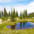 Mount Revelstoke Pond — Photo