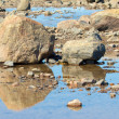 Hudson Bay Rocks and Reflection — Stockfoto