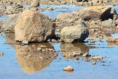 Hudson Bay Rocks and Reflection — Foto Stock