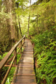 Rain Forest Boardwalk 2 — Stock Photo