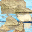 Polar Bear wading in the water — Foto Stock