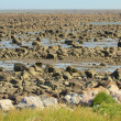 Hudson Bay Low Tide Stone Desert — 图库照片