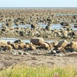 Hudson Bay Low Tide Stone Desert — Stock fotografie