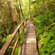 Rain Forest Boardwalk — Stock Photo