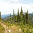 Path on Mt Revelstoke — Stock Photo