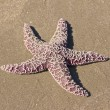 Pacific Starfish on the beach 1 — Stock Photo