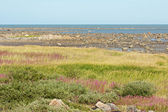 Hudson Bay Low Tide Stone Desert and Tundra — Stock Photo