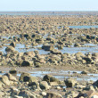 Hudson Bay Low Tide Stone Desert — Foto Stock