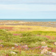 Hudson Bay Low Tide Stone Desert — Foto de Stock
