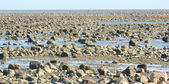Hudson Bay Low Tide Stone Desert — Stock Photo