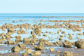 Hudson Bay Low Tide Stone Desert — Stock Photo