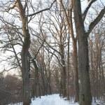 Lonesome winter path — Stock Photo #40222309