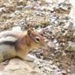 Stock Photo: Chipmunk on rock