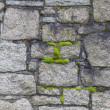 Stock Photo: Cemetery Wall and moss closeup