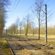 Tram tracks along a forest — Stock Photo