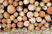 Timber Stack with blue markings — Stock Photo